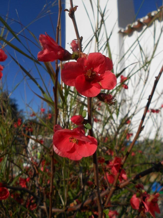 flores e amort cru3 319