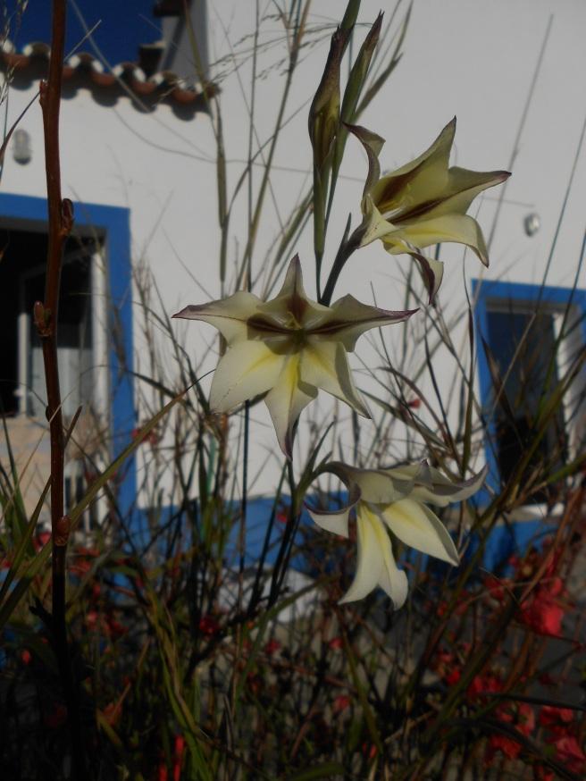 flores e amort cru3 329