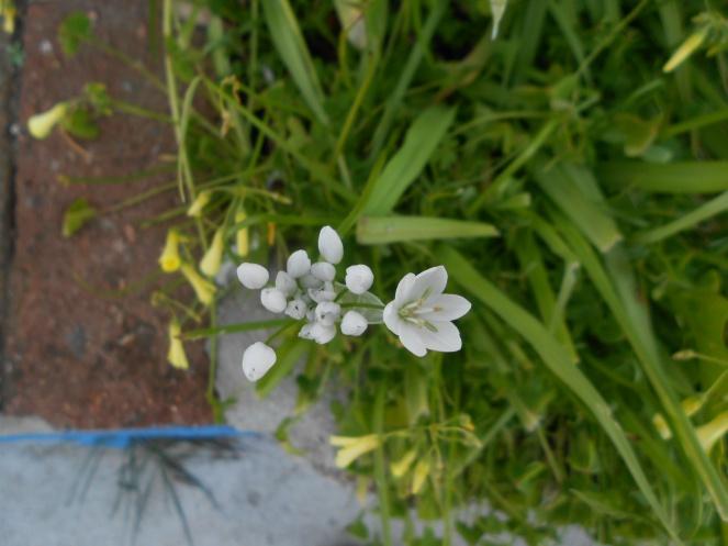 flores e amort cru3 623